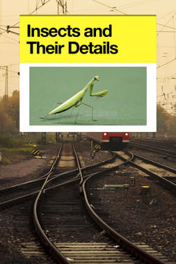 Insects and Their Details