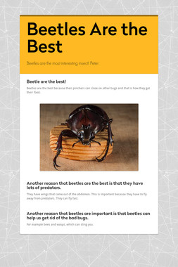 Beetles Are the Best