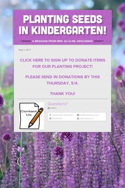 Planting Seeds in Kindergarten!