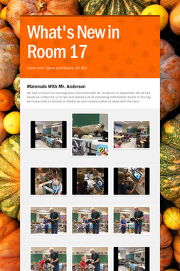 What's New in Room 17