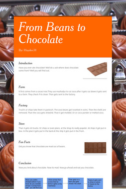 From Beans to Chocolate