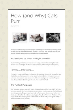 How (and Why) Cats Purr