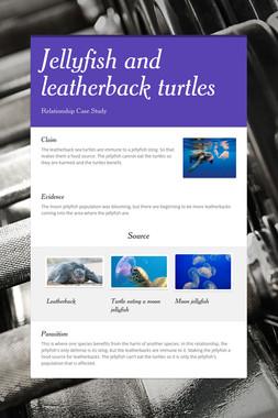 Jellyfish and leatherback turtles