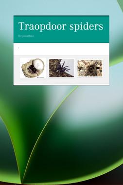 Traopdoor spiders
