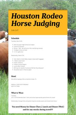 Houston Rodeo Horse Judging