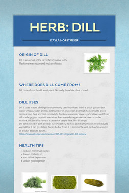 Herb: Dill