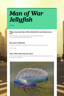 Man of War Jellyfish
