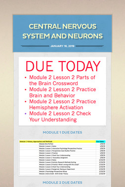 Central Nervous System and Neurons