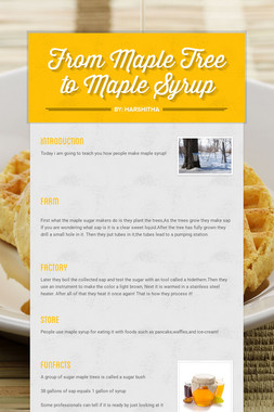 From Maple Tree to Maple Syrup