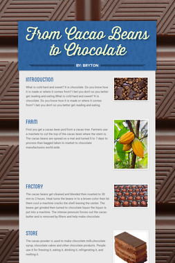 From Cacao Beans to Chocolate