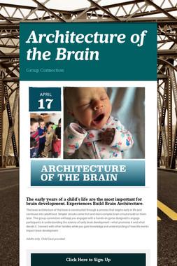 Architecture of the Brain