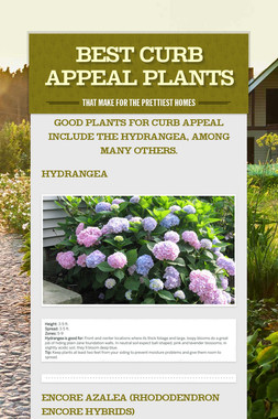 Best Curb Appeal Plants