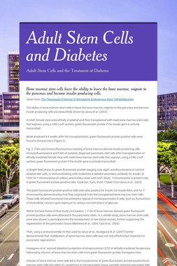 Adult Stem Cells and Diabetes