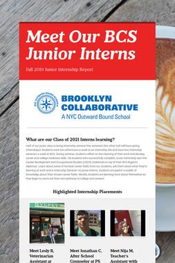 Meet Our BCS Junior Interns