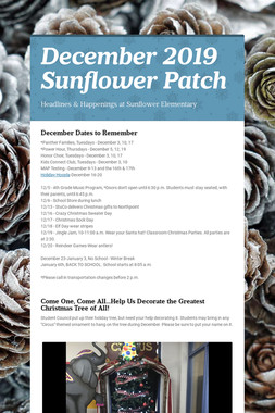 December 2019 Sunflower Patch