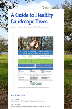 A Guide to Healthy Landscape Trees