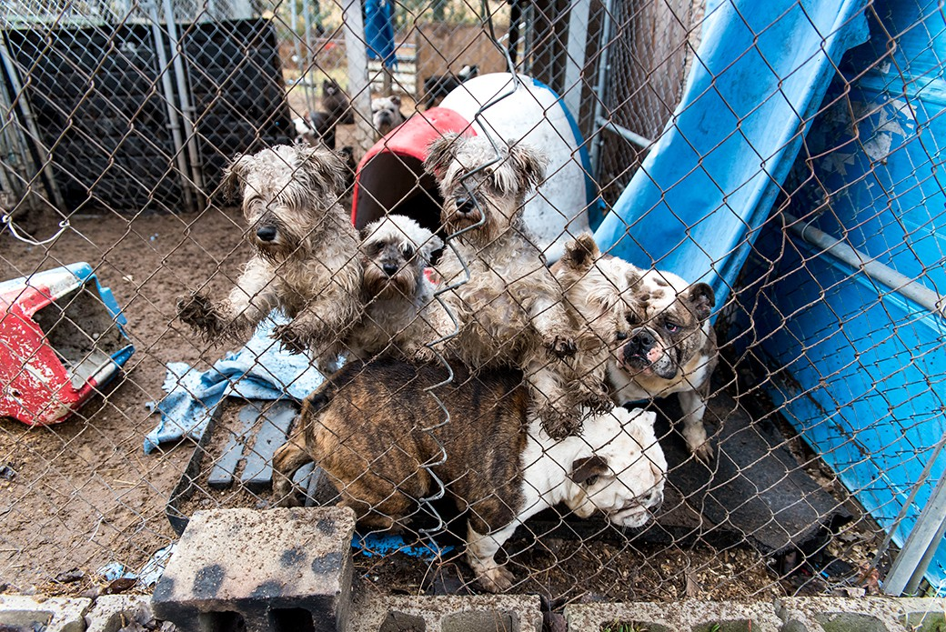 THE END: Puppy Mills | Smore Newsletters for Education