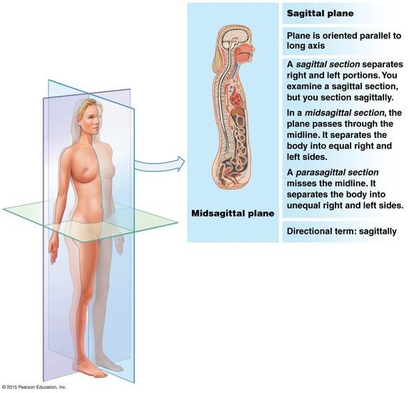 Anatomical Regions Organ Systems