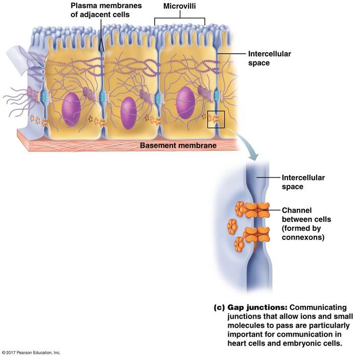 Cells Intro Membrane Transport