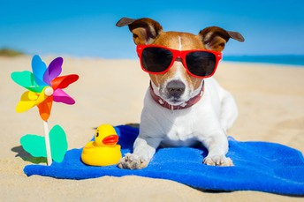 Share Your Favorite Summer Photo!