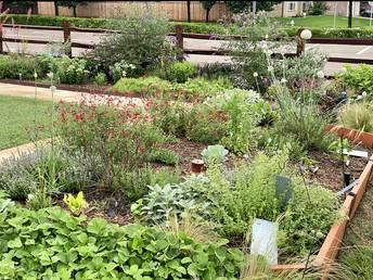 Our Summer Garden!