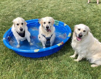 Moses and his siblings