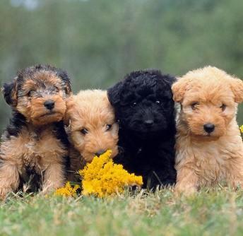 Companion Animal Care