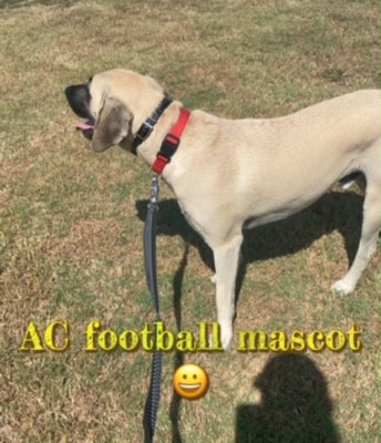 Chief wanted to chase the football players so I had to keep a strong hold on the leash.