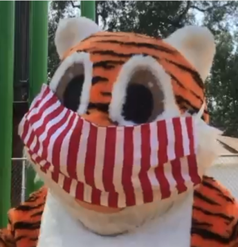 Hello Tiger Families!