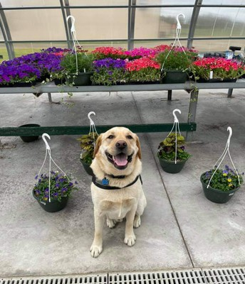 The FFA Plant and Flower sale needed a good photo to promote the event... I think they chose well!
