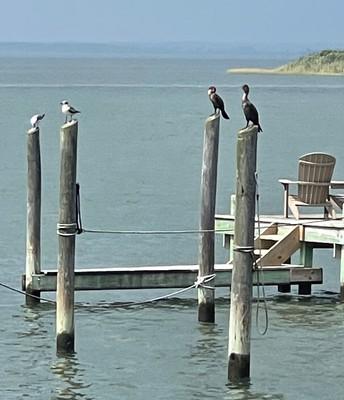 Birds of Beach Haven