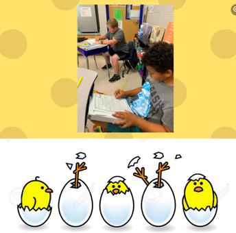 4th grade hatches eggs!