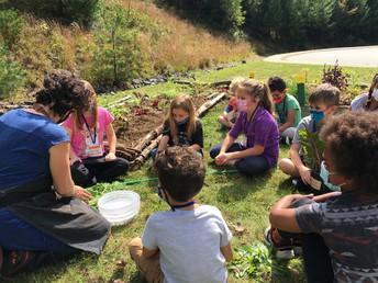 Exploring our Cornucopia Garden!