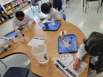 3RD GRADE SCIENTISTS: The Gummy Bear Experiment introduces students to the scientific method!