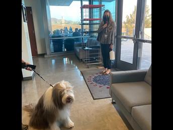 Wellness Dogs Visit AOC