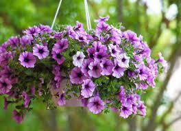 PTSA Hanging Flower Basket Fundraiser