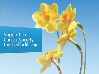 Yellow Mufti day in support of Cancer Society Daffodil Day 27th August 2021