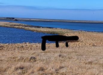 Bryggja hjá Óslandstjörninni