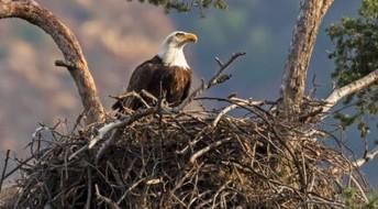 The Nourishing Nest