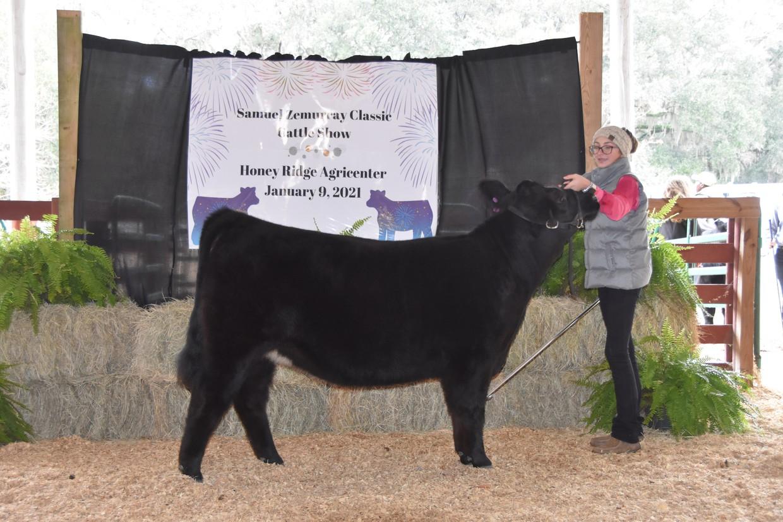 Image of Lexi Morton's show heifer, Belle