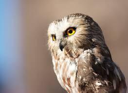 Go Owls!
