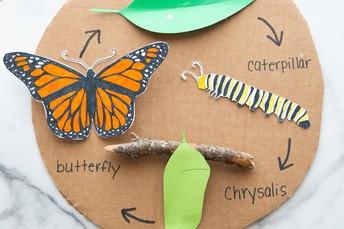 Jackson Elementary Second Graders Release Butterflies