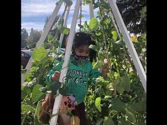 Gr 1 Harvesting the Garden they planted last year!