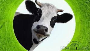 Cow Patty Bingo Tickets