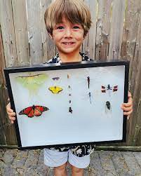 If you are interested in insects...