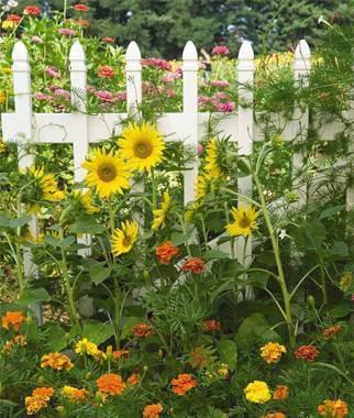 Ms. Allaway's Summer Garden Winners / Ganadores del jardín de verano de la Srta. Allaway