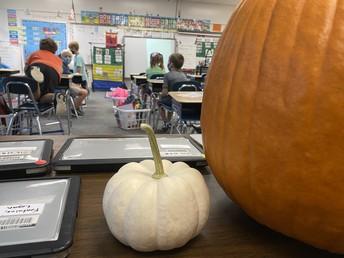 Calabazas!  Pumpkins!