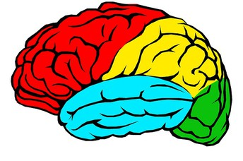 Helping Adolescents Learn about Their Brain