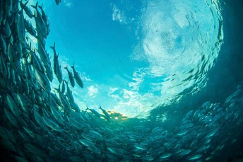 Grades 3rd-5th: 10 Unbelievable Facts About the Ocean