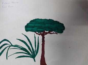 A minha árvore nativa